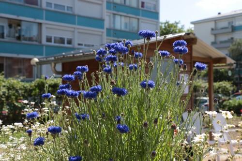 Actions «jardins en fête» le 3 juin : tour des quartiers